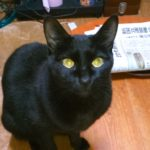 黒猫の性格と健康 ジジコとメルちゃん