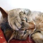 ホンマでっか?guのジーパンを履くと猫がメロメロになるのは嘘?