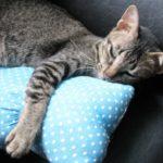 レジェンド松下のGゼロ枕で頭も無重力状態で爆睡できるって本当?